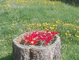 Logo Ambiente e Verde - fiori in un tronco